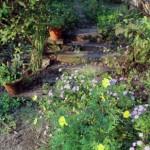 庭の草花、秋めいています〜。