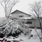 田園雪景色、続編〜。