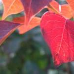 ギャラリー周辺の秋色。