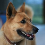 ギャラリー犬「タロ」の良い写真が撮れました。