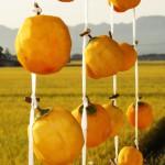 干し柿づくりの季節。
