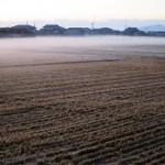 田園地帯も朝晩冷えています。