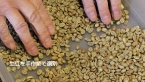 生豆を手作業で選別