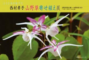 西村孝子山野草寄せ植え展ハガキ1