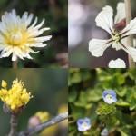 いよいよ春爛漫、庭の花、ご紹介します。