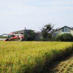 ギャラリー周辺の稲刈りが始まりました。